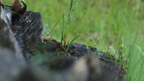 Wood Water Pipe stock footage