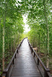 Wood way bridge in natural  mangrove forest Stock Photography