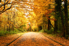Wood way in the forest in autumn Stock Image