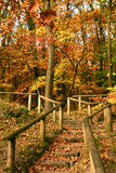 Wood way in the forest in autumn Royalty Free Stock Photos