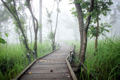 Wood way to forest in fog Stock Photography