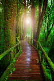 Wood ways in mountain rain forest Doi Inthanont National Park Ch. Iangmai northern of Thailand and beautiful flare light use for nature and wilderness background Royalty Free Stock Photography