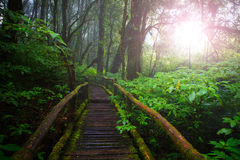 Wood ways in mountain rain forest Doi Inthanont National Park Ch Royalty Free Stock Photography