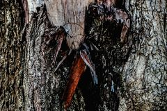 Wood weathered gnarled. Tree Broken, dry, cracked, there is a rough surface Stock Photos