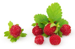 Wood wild strawberry Royalty Free Stock Images