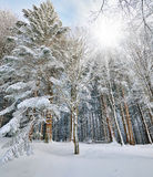 Wood in winter Stock Images