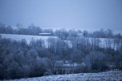 Wood winter. Rural farm sheeps Royalty Free Stock Image