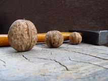 Wood, Winter Squash, Still Life Photography royalty free stock photo