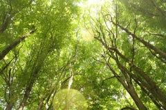 Wood. A wonderfull wood in summer Stock Photo
