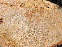 Wood wooden tree trees trunk fell felling chop chopping bark stock photography