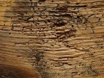 Wood worm holes. Timber background Stock Photos