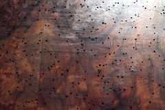 Wood with worm holes royalty free stock images