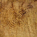 Wood years circles Royalty Free Stock Image