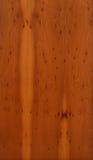 wood yew Royaltyfria Foton