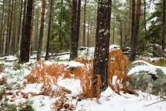 Woodaland onder de sneeuw Royalty-vrije Stock Afbeeldingen