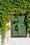 Woodbined fönster Royaltyfria Foton
