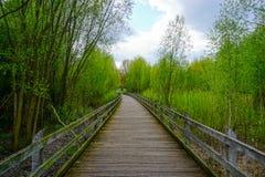 Woodbridge i natur Royaltyfria Bilder