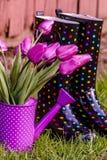 Woodburn Oregon Tulip Fields Stock Photography