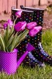 Woodburn Oregon Tulip Fields Stock Images