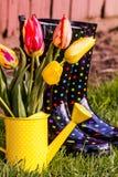 Woodburn Oregon Tulip Fields Royalty Free Stock Photo