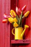 Woodburn Oregon Tulip Fields Royalty Free Stock Image