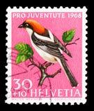 Woodchat Shrike (γερουσιαστής Lanius), υπέρ Juventute: Εγγενή πουλιά serie, circa 1968 στοκ φωτογραφία με δικαίωμα ελεύθερης χρήσης