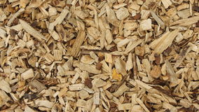Woodchips background. Pine woodchips spread on ground for the garden Royalty Free Stock Photo