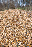Woodchips after harvesting and shredding trees Royalty Free Stock Photo