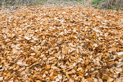 Woodchips after harvesting and shredding trees Stock Photography