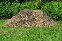 Woodchips mulch from shredded tree Royalty Free Stock Photos