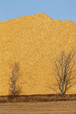 Woodchips Sawdust Pile Trees Vertical Stock Photos