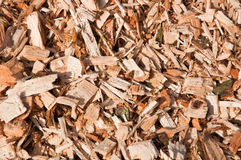 Woodchips from trees. Biomass for making electric energy Royalty Free Stock Photo
