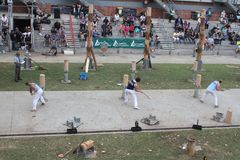 Woodchoppers op het werk Royalty-vrije Stock Afbeeldingen