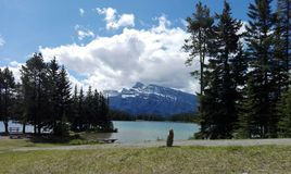 A woodchuck on edge of Two Jack  lake, Alberta, Canada Stock Photo