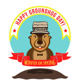 Woodchuck on winter background with a funny hat on his head. Hap Royalty Free Stock Image