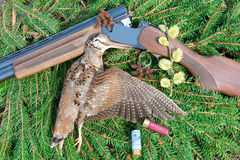 Woodcock with hunting attributes Stock Images