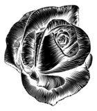 Woodcut цветка года сбора винограда розовым выгравированный вытравливанием Стоковые Фотографии RF