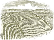 Woodcut Aerial of Field. Woodcut-style illustration of an aerial view of farm fields Royalty Free Stock Photos