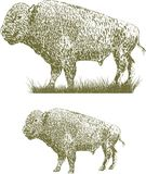 Woodcut Bison. Woodcut style illustration of a bison Royalty Free Stock Image