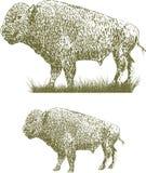 Woodcut Bison Royalty Free Stock Image