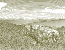 Woodcut Bison Scene. Woodcut style illustration of a bison on the prarie Royalty Free Stock Photos