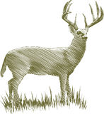 Woodcut Deer. Woodcut-style illustration of a male deer Royalty Free Stock Photo