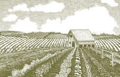 Woodcut Garden. Woodcut-style illustration of a farmer's garden Stock Images