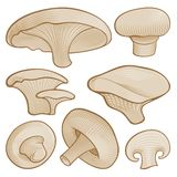 Woodcut mushrooms Stock Photo
