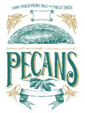 Woodcut Pecan Label Stock Image