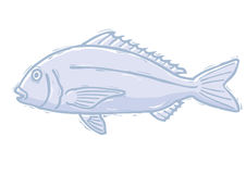 Woodcut sea bream Stock Photos