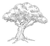 Woodcut sketch Style Tree Stock Photos