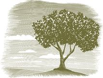 Woodcut Tree Landscape Vignette vector illustration