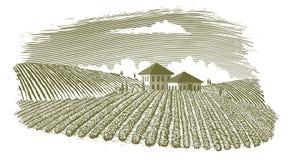 Woodcut Vineyard Landscape Stock Images