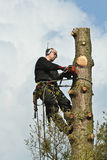 Woodcutter in action in a tree in denmark Stock Photography